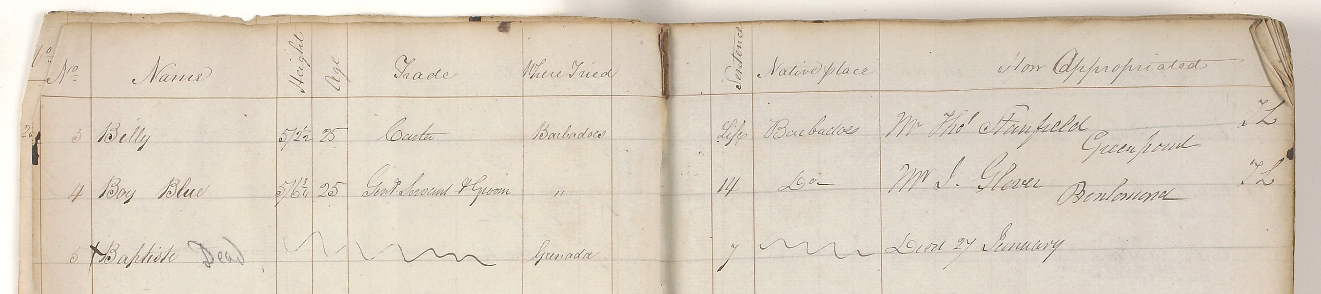 Search page list of immigrants to vdltasmania before 1905 with mary solutioingenieria Image collections